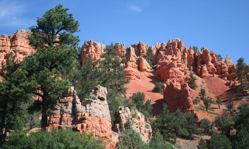 Dixie National Forest In Utah Alltrips
