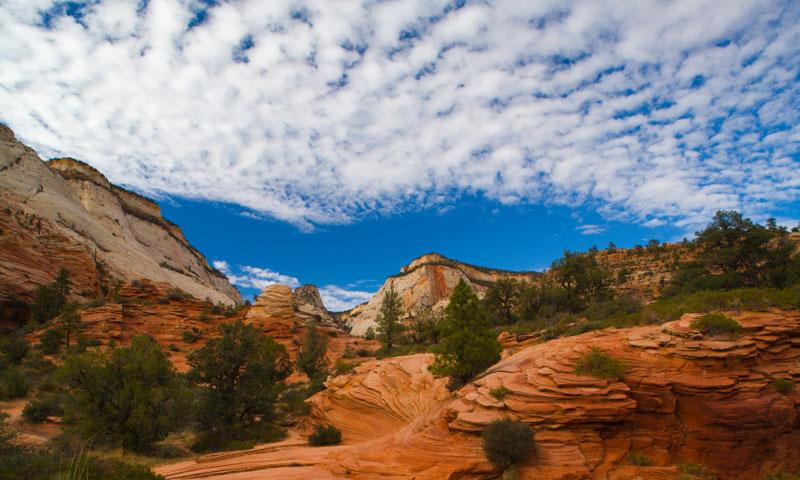 Hiking Trail in Zion National Park Backcountry