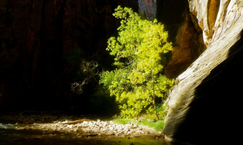 Spectacular sunlight in the Zion Narrows Canyon