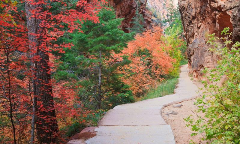 Refrigerator Canyon Zion National Park