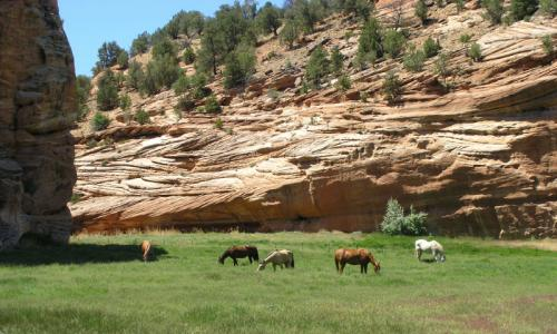 Pet Friendly Hotels In Kanab Utah