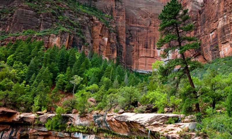 Cliffs above Emerald Pools in Zion National Park