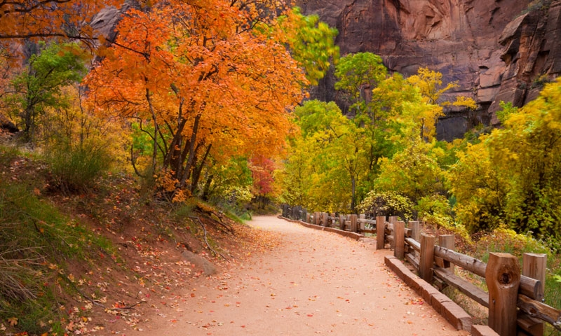 Riverside Trail in Zion National Park